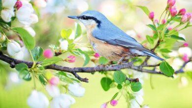 Photo of Estudio encuentra que escuchar el canto de los pájaros o el agua mientras corre incide en los niveles de estrés