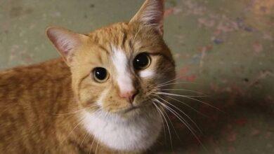 Photo of ¿Los gatos son traicioneros? Estudio demuestra que los felinos no tienen problemas en ir con una persona que hizo daño a su amo
