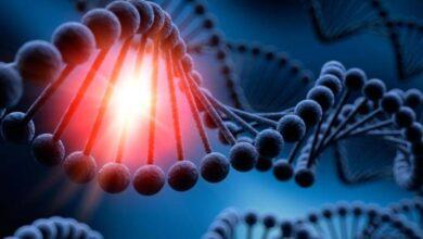 Photo of Científicos británicos tienen evidencia de que el ADN de los animales y humanos se puede recolectar desde el aire