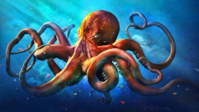 Photo of Por primera vez en la historia captan en video a un calamar gigante cazando presas aproximadamente a 800 metros de profundidad