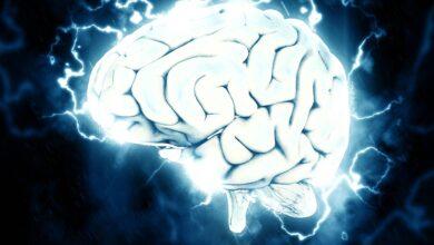 Photo of Tal vez el cerebro no es tan importante para dormir