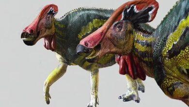 """Photo of Hallan en México fósiles de un dinosaurio """"hablador"""" de  hace 73 millones de años"""