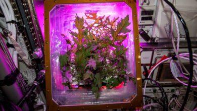 Photo of La NASA estudia cómo la jardinería ayuda a los astronautas en el aislamiento