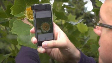 Photo of Cómo identificar toda clase de plantas con el móvil