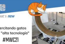 Photo of Una rueda gigante para que los gatos hagan ejercicio, visto en el MWC 21