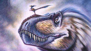 Photo of Este pequeño pájaro que vivió en la Tierra hace 120 millones de años tenía un cráneo como el de un T-Rex