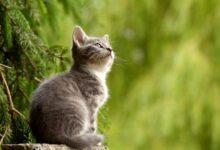 Photo of Una app para saber cómo se siente tu gato