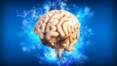 Photo of Científicos consiguen crear minicerebros que replican la actividad neural compleja