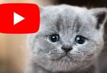 Photo of YouTube demandado por vídeos de abuso animal